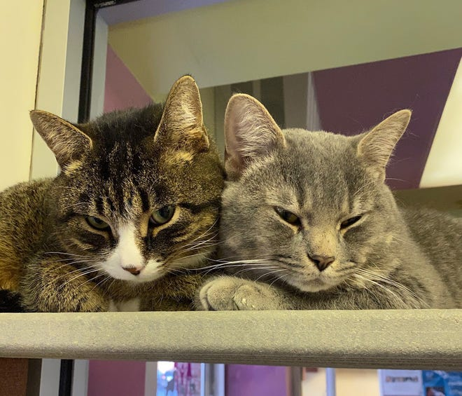 Howie and Carter hope to have a home for Christmas. They are waiting at the Oshkosh Area Humane Society.