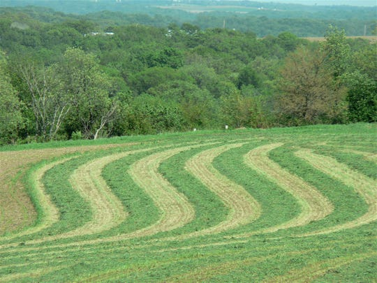 The weather is often the deciding factor in harvesting a good hay crop like this one.
