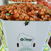 The Healthy Grown label is visible on bags of Gumz Muck Farms onions stored in cardboard bins.
