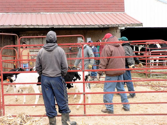 The dairy auction is a sad but final event for many farm families.