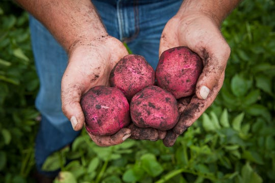"An image of potatoes in the hands of Rod Gumz was part of a photo shoot coordinated with a retailer. ""We work with grocery stores looking to push the 'buy local' idea,"" Gumz says."