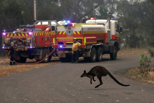 A wallaby hops across a road to flee a fire near Mangrove Mountain, north of Sydney on Dec. 10, 2019.