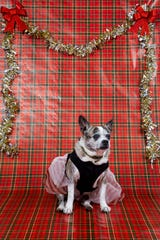 Izzy poses for a portrait on Friday, December 20, 2019.