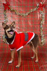 Rosco poses for a portrait on Friday, December 20, 2019.
