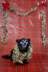 Rosie poses for a portrait on Friday, December 20, 2019.