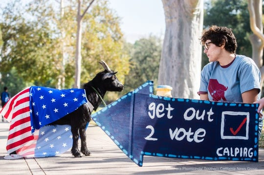 Student Ash Conner, 30, a member of the California Public Interest Research Group (CALPIRG), a statewide student run activist group, brings out Luna, a Vote Goat, to encourage students to get out and vote at UC Riverside campus in Riverside on Tuesday, Nov. 6, 2018.