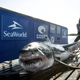 Ironbound, a nearly 1,000-pound white shark, was tagged Oct. 3 near Lunenberg, Nova Scotia.