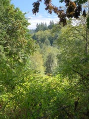 A view of the forested property that will soon be transferred to the city of Poulsbo.