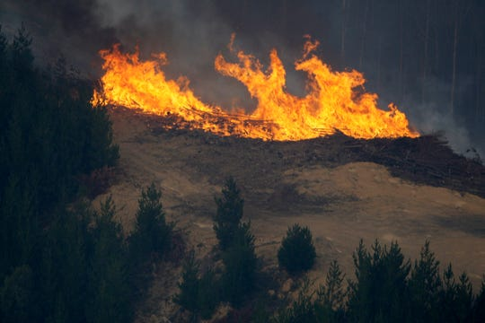 A fire erupts in a pine tree plantation northeast of Melbourne, Australia, Sunday, Feb. 8, 2009.