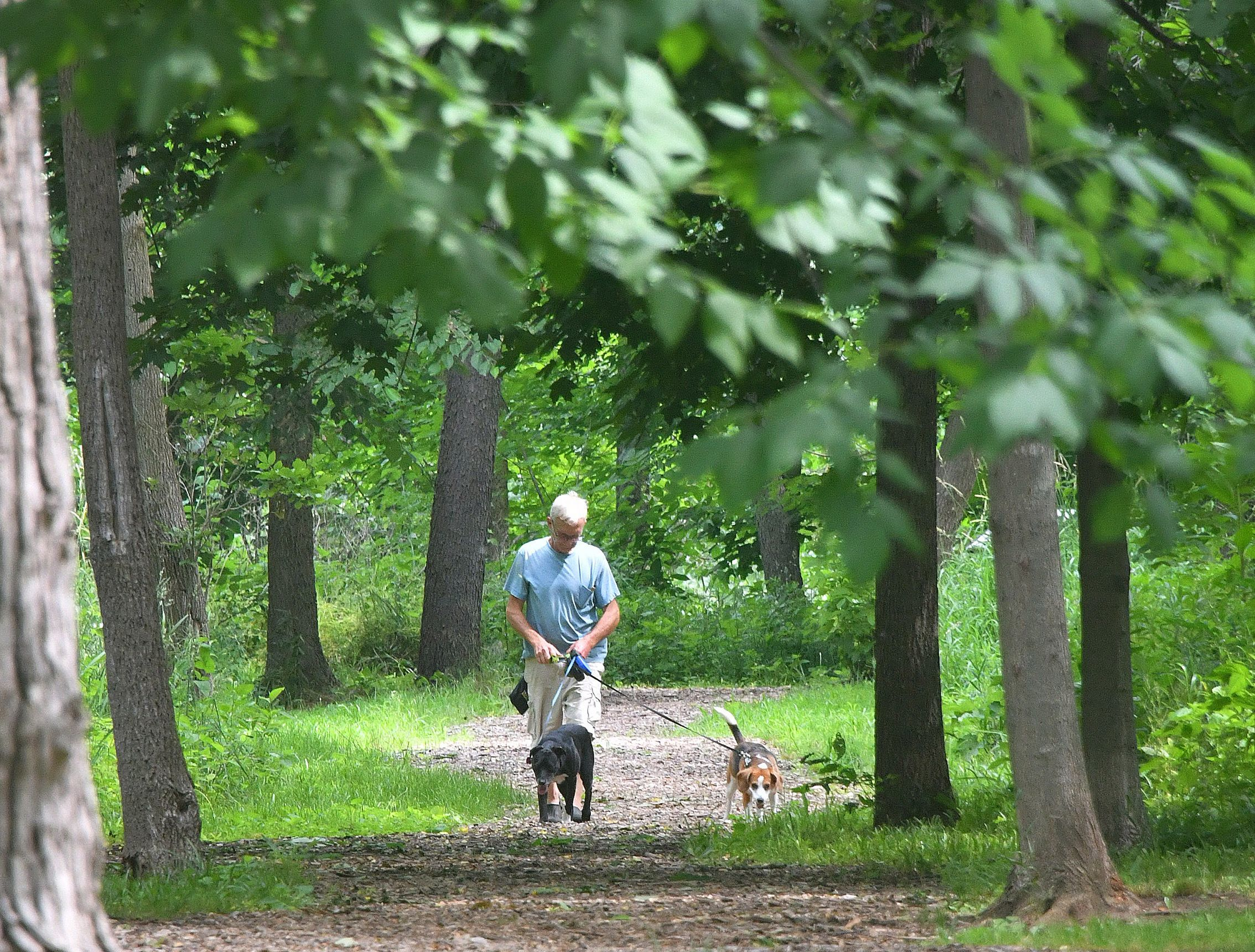 A stroller walks a pair of dogs through Danford Island Park in Dimondale, Michigan in this Jun 25, 2018, file photo. A nearly $170K grant from the Michigan Natural Resources Trust Fund helped to restore the contaminated, abandoned park.