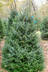 The Howell Nature Center is giving away its extra Christmas trees through the end of the day Monday Dec. 23, 2019.