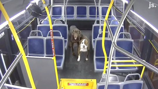 Bus driver found 2 lost dogs in 20-degree weather. She helped bring them home for holidays