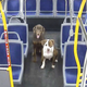 A Milwaukee bus driver saved two dogs that were wandering the street around midnight, miles from their home.