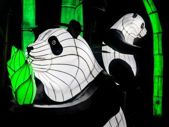 Panda bears at the Nashville Zoo's Zoolumination: Chinese Festival of Lights Sunday, December 22, 2019.