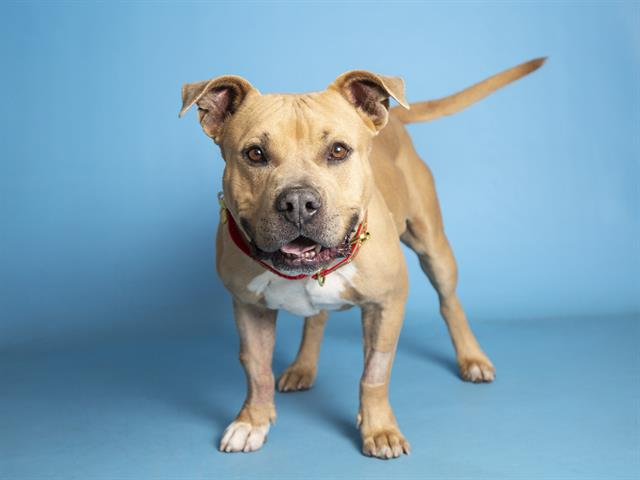 2-year-old Meathead is waiting to be adopted at the Sunnyslope Campus.