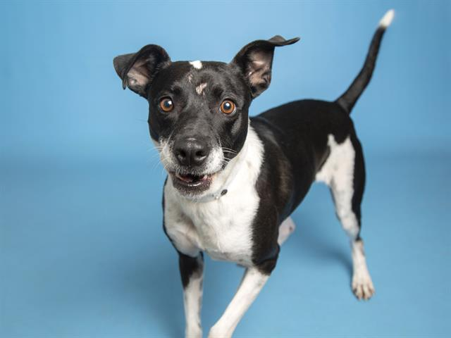 6-year-old Dixie is waiting to be adopted at the Sunnyslope Campus.