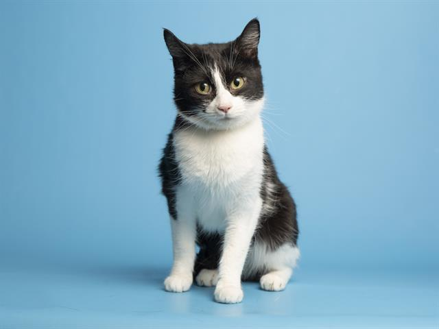 4-year-old Marilyn is waiting to be adopted at the Petsmart at Old Town Scottsdale.