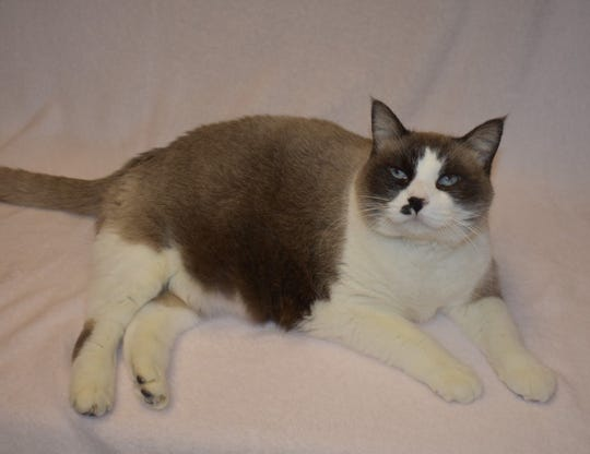 Vivian is available for adoption at 11129 Michigan Avenue, Youngtown. For information call 623-876-8778 after 10 a.m.
