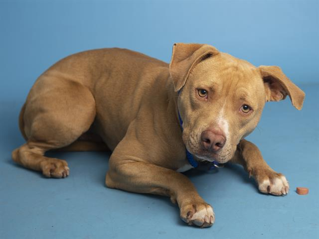 1-year-old Teddy Bear is waiting to be adopted at the Sunnyslope Campus.