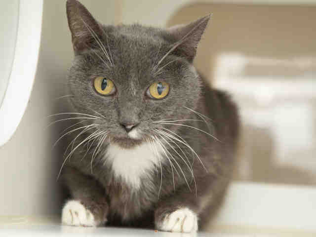 9-year-old Pawdrey Hepburn is currently in foster care but available for adoption — inquire about ID number 583902.