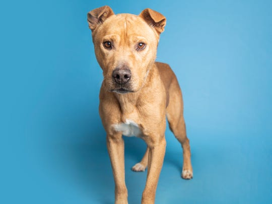 Simba will be available for adoption on Sunday, December 29 at noon with Arizona Humane Society. For more information, call 602-997-7585 and ask for animal number 625600.