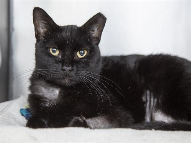3-year-old Karen is waiting to be adopted at the Sunnyslope Campus.