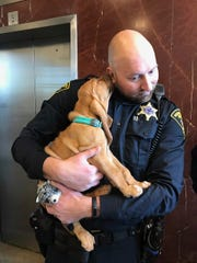 Deputy Michael Ottley with his new partner, an 8-week-old red bloodhound named Peak.