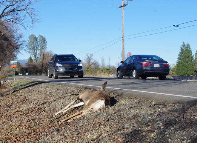 State Department of Fish and Wildlife officials said Californians cannot collect and consume roadkill come Jan. 1, 2020.