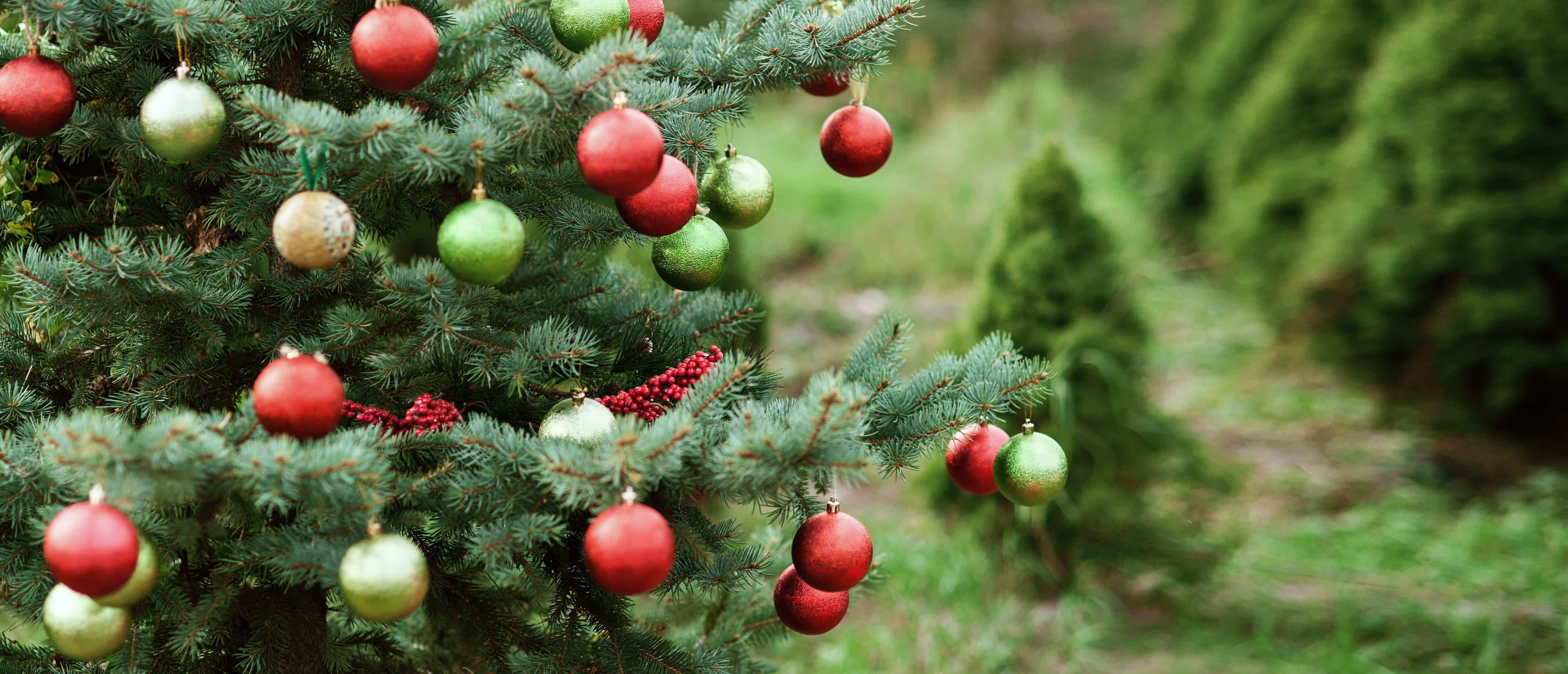 Christmas Is Officially Over Here S How You Can Recycle Your Tree