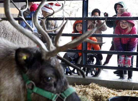 Christopher Herrera Mauricio 8 (orange jacket) a student at Colerain Elementary School December 17, 2019 looks at the reindeer. Dan Downs of Pine Acres Farm visits the school every two years with his reindeer.