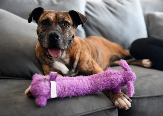 Cocoa spends her Christmas in Briana Thomson's home, Wednesday, Dec. 25, 2019. Cocoa has been in the shelter for 592 days.