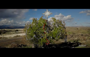 A tree in the median by Interstate 17 north of Sunset Point is decorated for Christmas this year after surviving a wildfire this summer.