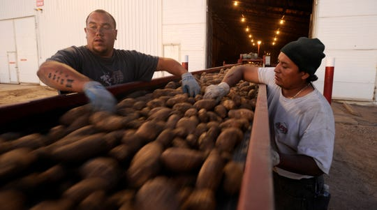 Seth Schouten,left, and Jose Silva, remove debris from a conveyor belt, as potatoes are being moved  into a storage facility on Sept. 16, 2008  at the Wada Farms facility in Power County, Idaho.