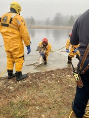 Thursday morning, South Brunswick and Plainsboro firefighters rescued a young deer who was trapped on the ice in a pond on Route 1.