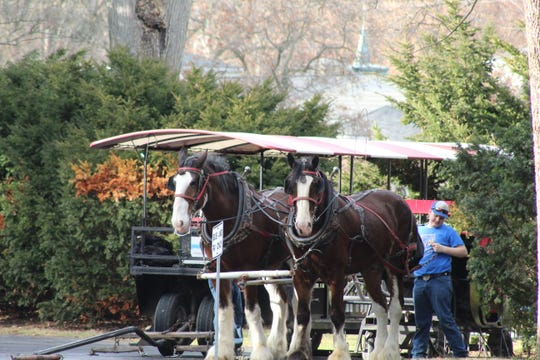 The South Creek Clydesdales were at the Rutherford B. Hayes Presidential Library and Museums Thursday for horse-drawn sleigh rides. The rides will continue at the Hayes center through Dec. 31.