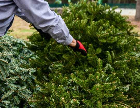 A Hattiesburg resident recycles his Christmas tree through the City of Hattiesburg's Christmas tree recycling program Dec. 26, 2019.