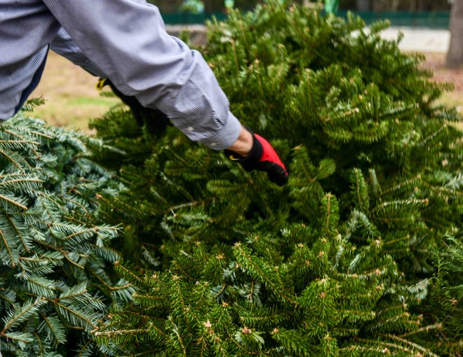 Recycling Christmas trees can give your tree a second life.