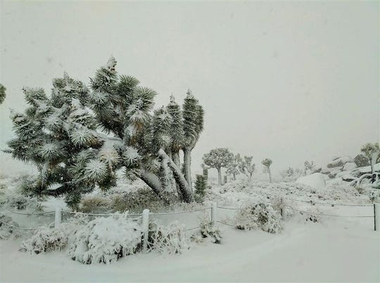 Snow covers an area in Joshua Tree National Park Thursday, Dec. 26, 2019. It came from a winter storm that dumped several inches of snow on local mountains and just under an inch of rain on Palm Springs.