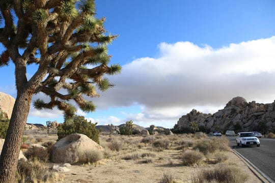 Holiday Forecast Up To 2 Feet Of Snow In Joshua Tree