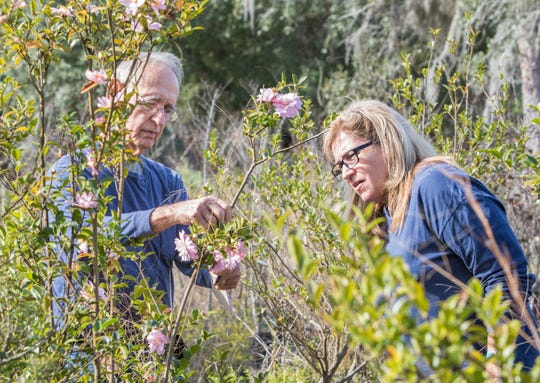 Owner Don Plank, left, helps Susan Ledbetter pick out trees at Hiawatha Nursery in Navarre on Thursday, Dec. 26, 2019.  The nursery is closing down after 36 years in business.