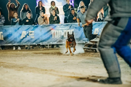 """K9 cops and their police handlers compete alongside civilian dogs and their trainers in A&E's """"America's Top Dog."""""""
