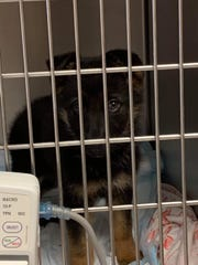 German shepherd puppies that were left on the side of the freeway are being kept in isolation.