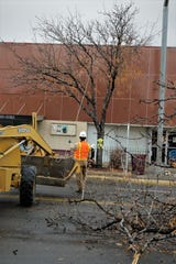City workers prepare to bring down a treet near the intersection of West Main Street and Allen Avenue on Dec. 27, 2019, in preparation for the beginning of the Complete Streets project.