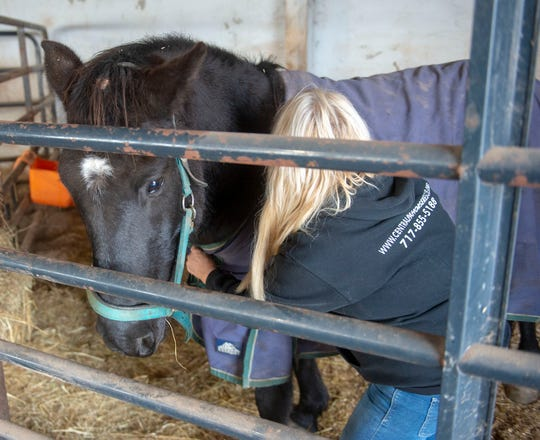 Central PA Horse Rescue vice president Connie Greenawalt removes Blackie's blanket for photos on Friday, Dec. 27, 2019.