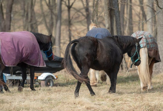 Blackie has made fast friends with his three barnmates at the Central PA Horse Rescue in Warrington Township. The four horses spend their days patrolling the York County property.