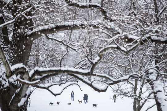 People enjoy a past snowfall with their dogs at Rockford Park.