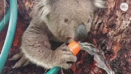 Over 1 billion animals feared dead in Australian wildfires, experts say