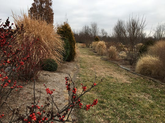Berries brighten the landscape of the Winter Garden at the Springfield Greene County Botanical Center.