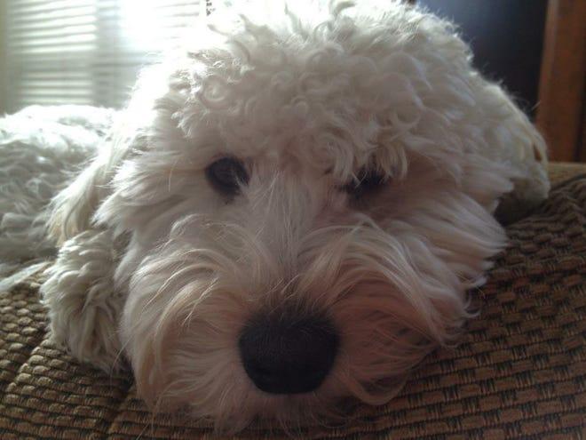 Brian Dickerson's dog.