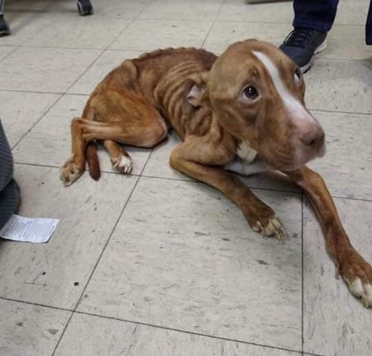 A starving dog was rescued in Paterson on Saturday, Dec. 28 and taken to Oradell Animal Hospital.